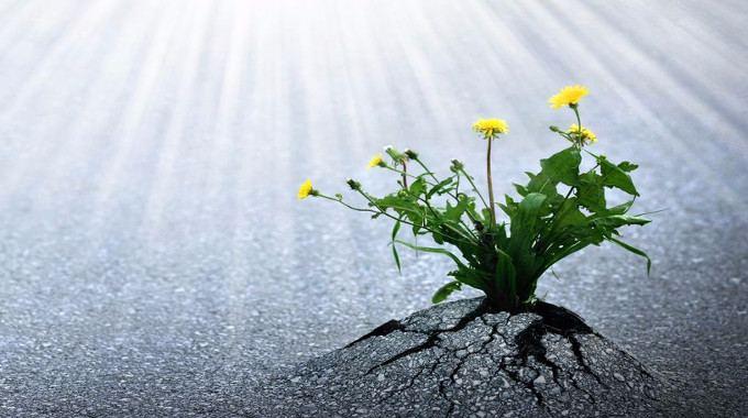 flowers-emerge-through-asphalt-compressed