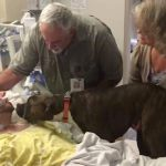 Hospital Allows Grieving Dog To Visit Dying Owner One Last Time [Watch]