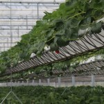 Solar Panel Farm Yields 17,000 Tons Of Food Annually In The Worst Climates
