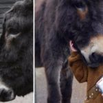 Mute Girl Befriends Donkey Then Surprises Everyone By Uttering These Three Words