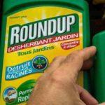 California to List Glyphosate as a Carcinogen