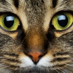 """Can Cats and Dogs See """"Spirits""""? Science Has Confirmed They Can See Frequencies We Can't"""