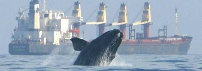 North Atlantic Right Whale Population Dips Below 450 After 'Deadliest Year' Since Whaling Era