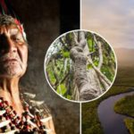 Ayahuasca: Understand the Dangers & Possible Side Effects