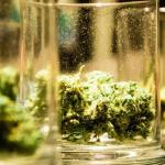 10 Things You Didn't Know About Marijuana