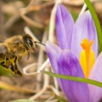In 'Huge Win for Pollinators, People, and the Planet,' EU Bans Bee-Killing Pesticides