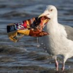 EU Urged to Go Further to Save Trash-Filled Waters With New Proposed Plastics Ban