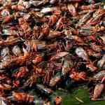 Dr. Mercola: Eating Crickets Could Be Good For Your Gut