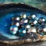 The Origins of Your Pearls and All You Need to Know about Pearl-Farming
