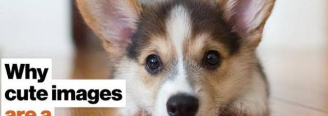 WATCH: Why Cute Images Are a Productivity Hack [2-MIN VIDEO]