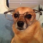 5 Things You Probably Didn't Know Your Dog Knows About You