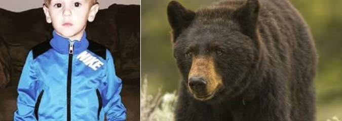 "Black Bear Protects Missing Three-Year-Old Casey Hathaway For Two Days – ""a Friend In the Woods"""