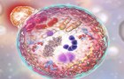 How to Use Autophagy to Clear Damaged Cells From Your Body And Reduce Inflammation