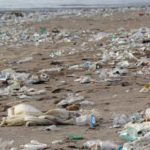 Historic Agreement to Reduce Plastic Waste Reached by Nearly Every Country in the World