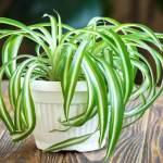 5 Best Indoor Plants for Your Health