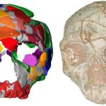 Humans Arrived in Europe 150,000+ Years Earlier Than Previously Thought