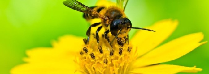 EPA Approves Organic Fungicide Intended to Help Save Bees
