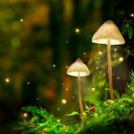 The Compound Psilocybin in Magic Mushroom Found Safe for Consumption in Largest Ever Controlled Study