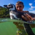 Penguin Returns Every Year to Reunite With the Man Who Saved His Life