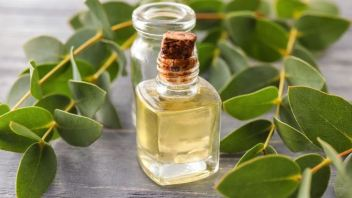 Eucalyptus Oil May Reduce Inflammatory Reactions in Lungs
