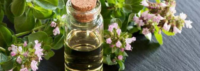 Oregano Oil Benefits Immune System and Fights Infection