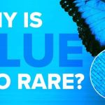 Mysterious Blue: Nature's Rare Flower Color Exists Thanks To Bee Vision