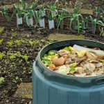 Not Wasting Food to Save the World