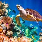 Do Marine Protected Areas Work?