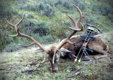 Deer victim of bow and arrow 9