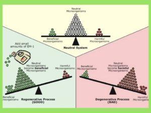 Inforgraphic of Effective Microorganism
