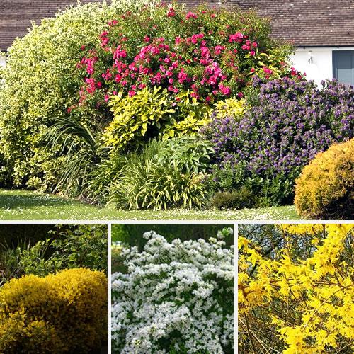 comment faire un massif d arbustes