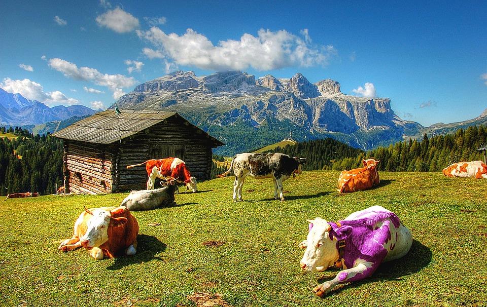 Parmi les exemples de storytelling réussi, la vache pourpre de Seth Godin.
