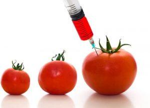 tomatogm