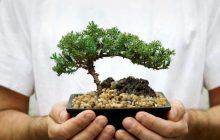 9 PLANTAS PARA ATRAER DINERO, PROSPERIDAD Y AMOR