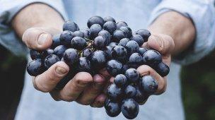 Mãos segurando cacho de uvas
