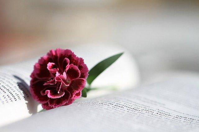 Mensagem da Bíblia Para Hoje - Imagem ilustrativa da bíblia aberta com uma flor entre as folhas