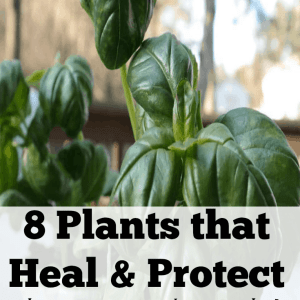 8 Plants that Heal & Protect and are a must in your home!