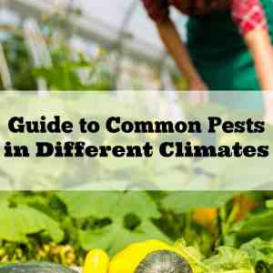 Guide to Common Pests in Different Climates