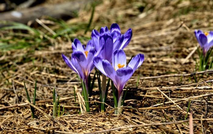 tatry-koscieliska-valley-winter-spring-1240x700