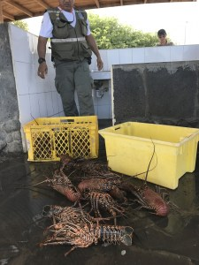 Checking in lobster