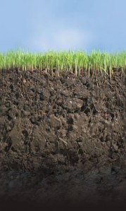 Healthy soils reduce erosion and increase water holding capacity.