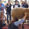 2015 SFS sheep class