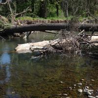 Big logs come down Milk Creek
