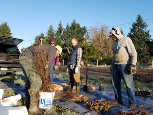 Native plant sales provided forbs, grasses, shrubs, and trees for planting.