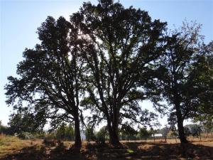 We work with landowners to protected Oregon white oaks and oak habitat.