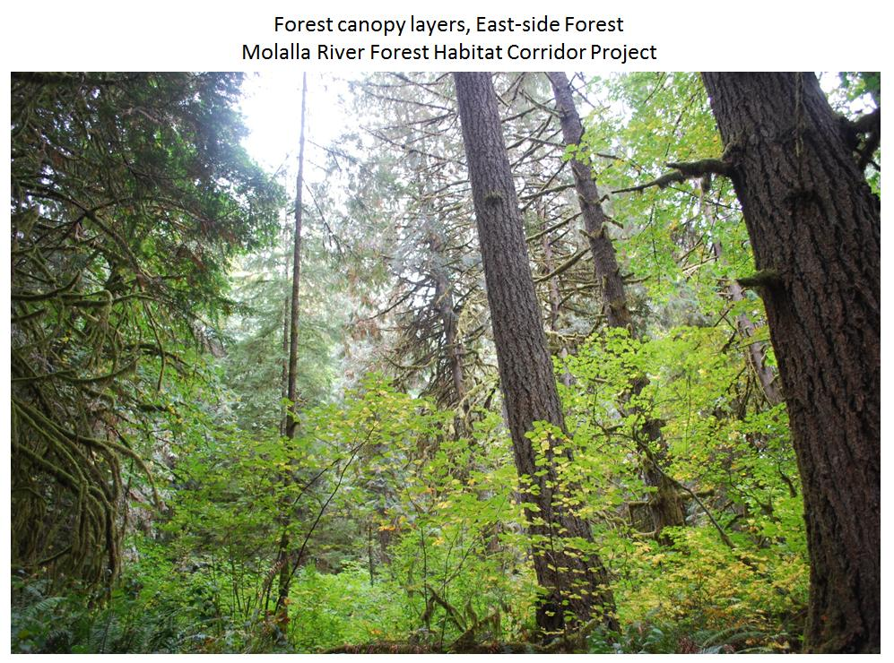 Forest canopy layers Eastside & Forest canopy layers Eastside - Clackamas SWCD