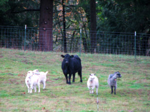 Take actions now for a healthy pasture next spring!
