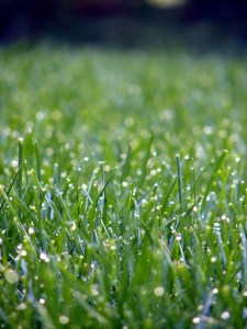 Achieving the perfect lawn can be challenging.