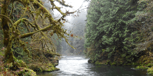 The Molalla River Watershed provides water to residents in Colton, Molalla, and Canby.