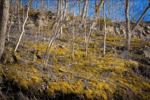 Moss can help minimize erosion. Photo by Jason Bolonski